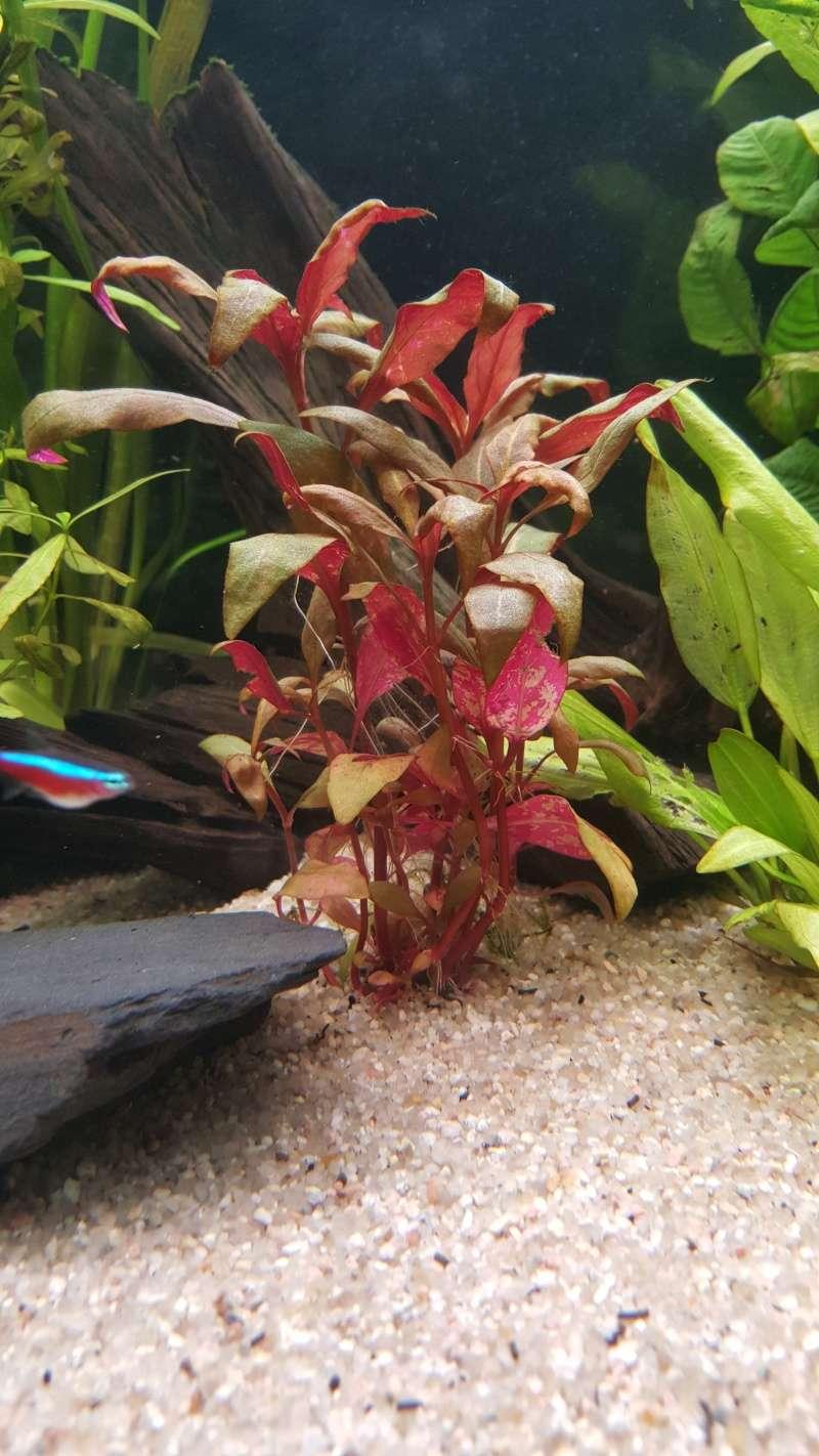 Besoin d'aide pour mes plantes  20151116