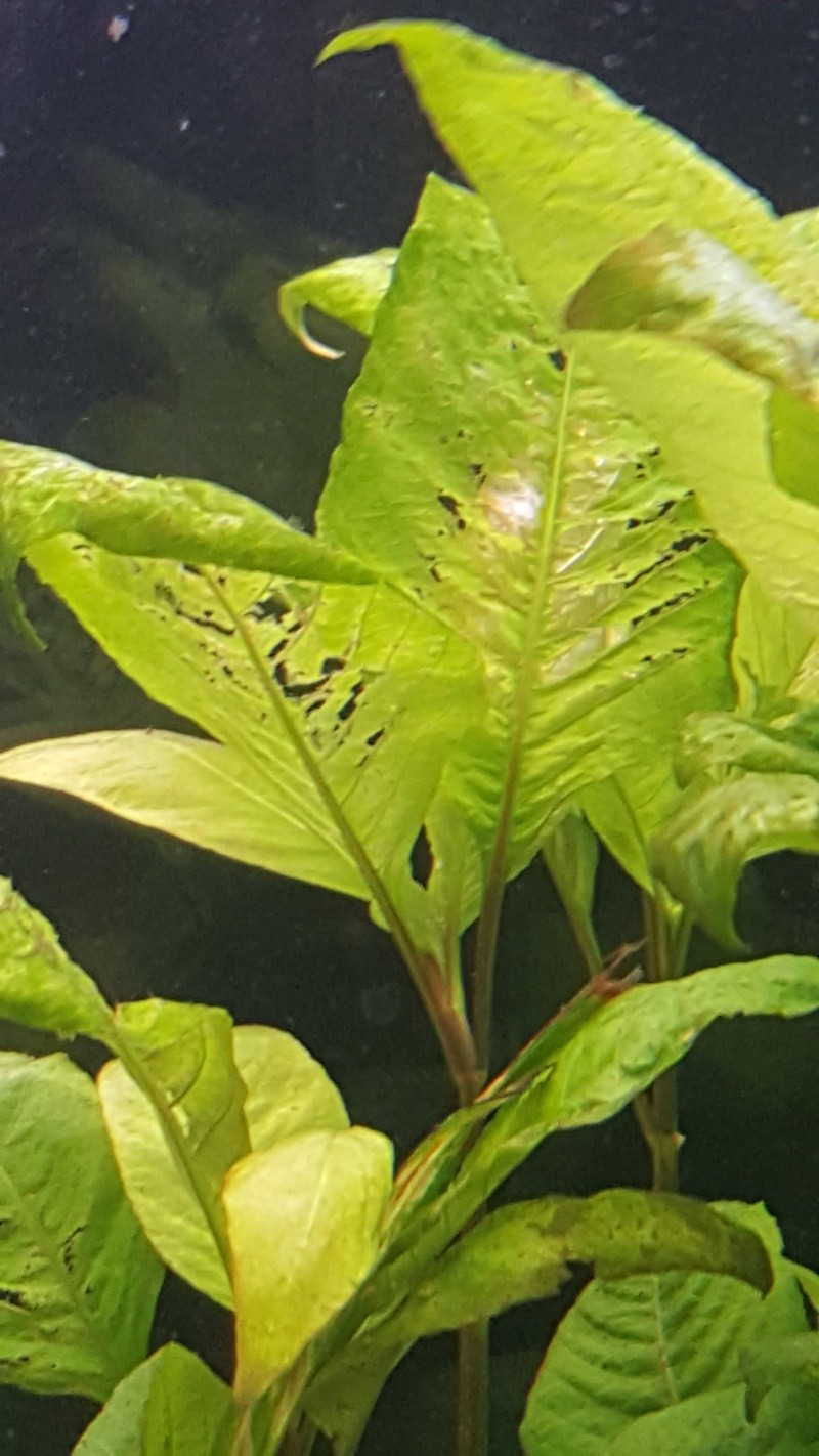Besoin d'aide pour mes plantes  20151118