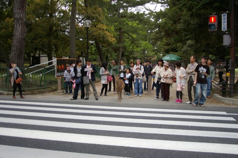 qui a été au japon ?des photos?un prochain départ? photo japon2011 - Page 2 Imgp7410