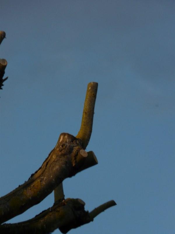 les arbres sont ils des bikers  P1060915