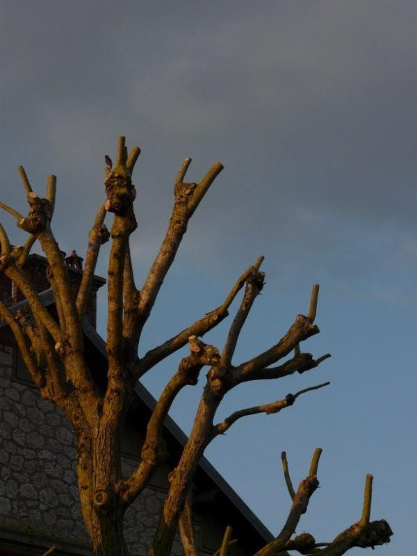 les arbres sont ils des bikers  P1060916