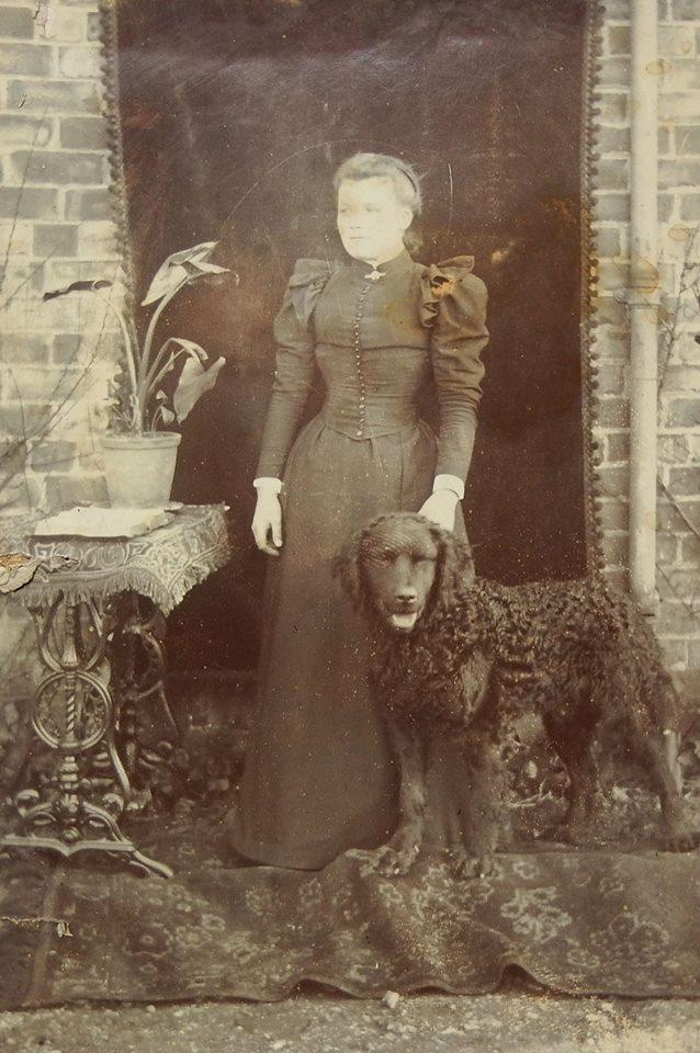 L'Histoire du Curly Coated Retriever en images... 11071810