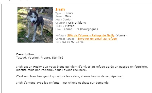 IRISH HUSKY MALE REFU89 Sans_t10