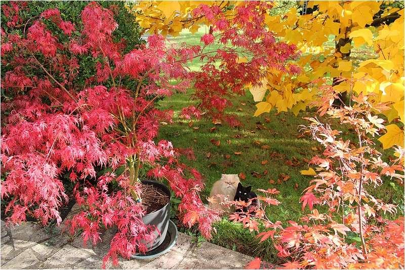 Couleurs d'automne Img_2023