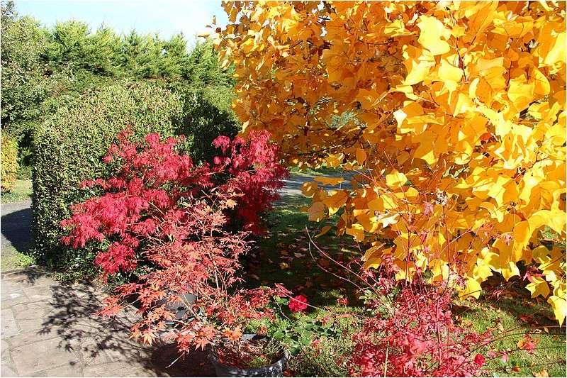 Couleurs d'automne Img_2114