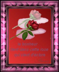 les bonjours du jour - 2011 C_anna12
