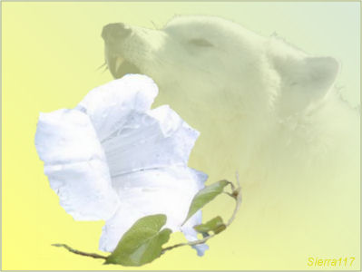 les totems - animaux, plantes et pierres-pouvoirs Lierre11