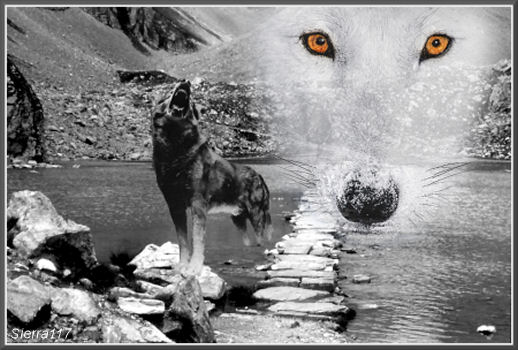 photomontages Loup_s10