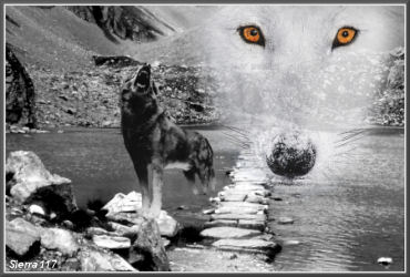 les totems - animaux, plantes et pierres-pouvoirs Loup_s11