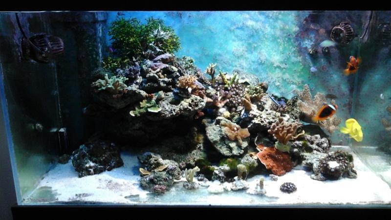 Lou aquario  de pouing 14432011