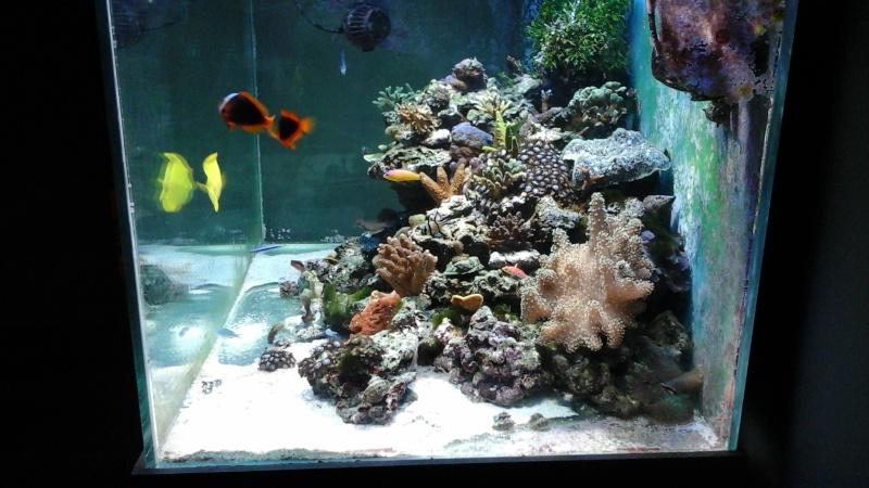 Lou aquario  de pouing 14432012