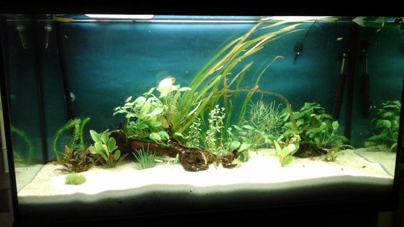 Lou aquario  de pouing 14432013