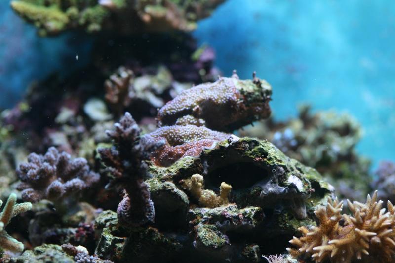 Lou aquario  de pouing Img_7010