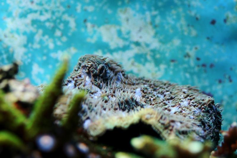 Lou aquario  de pouing Platea10