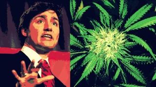 Légalisation de la marijuana! Trudea10