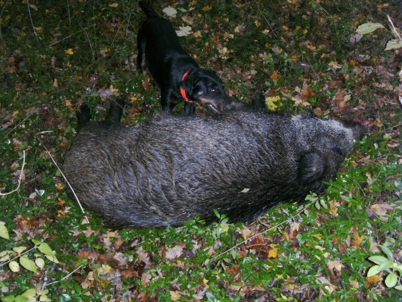 chasse au gros 2010/2011 Bild1410