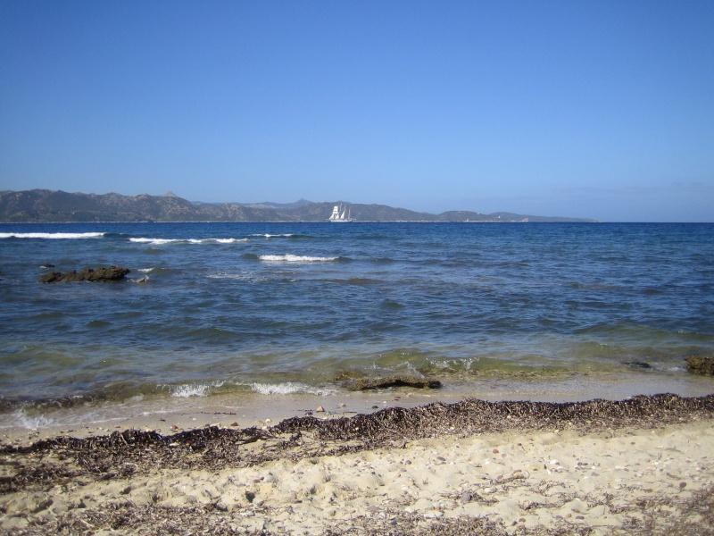 retour de vacances la Corse magnifique  - Page 2 Img_1017