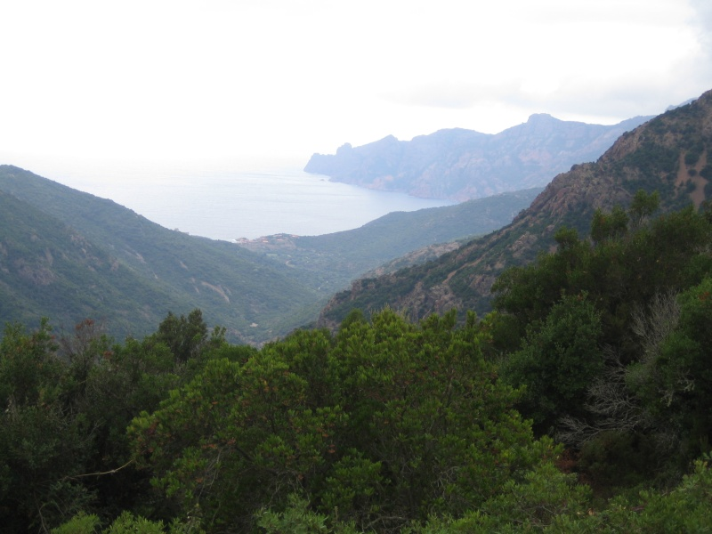 retour de vacances la Corse magnifique  - Page 2 Img_1020