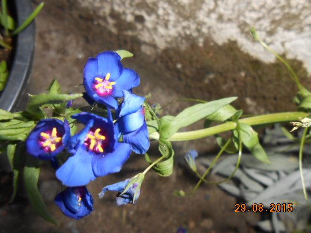 Connaissez vous cette plante ? Dscn2472