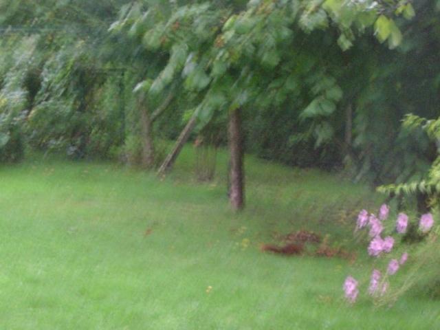 Ce matin  j'ai vu mes noisettes  partir   Dsc00211