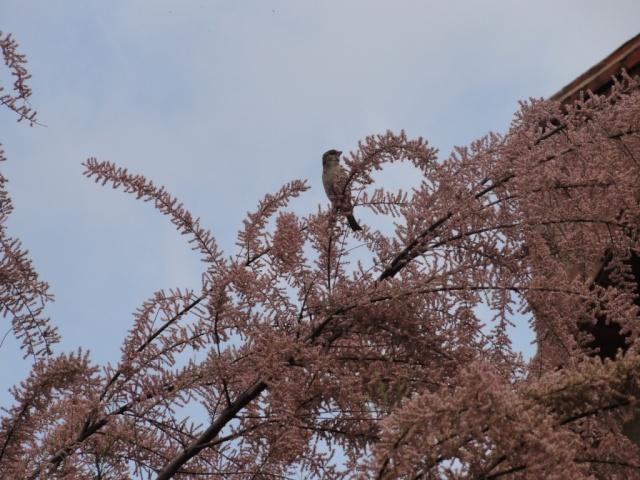 Zoé  et les  oiseaux  . Dsc03624