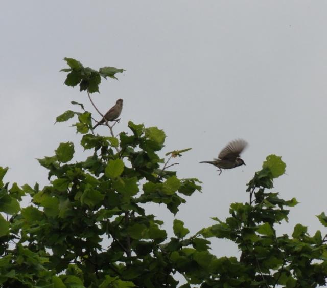 Zoé  et les  oiseaux  . Dsc03625