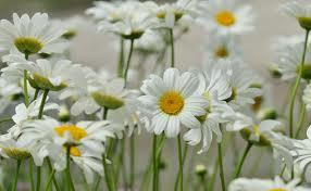 """"""" 31 Mai = 31ème Prière """" Mois de Marie offrons à notre Maman du ciel une petite couronne """" Margue10"""