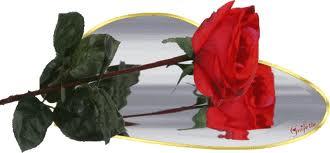 Neuvaine à Sainte Rita du 14 au 22 mai Roses_15