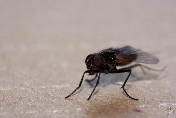 Des mouches en vrac Img_1510