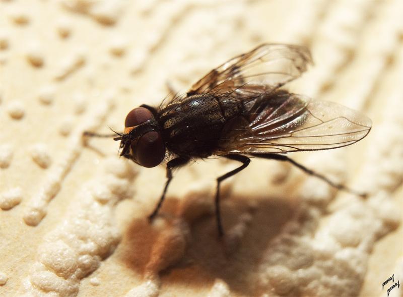 Des mouches en vrac Img_4214