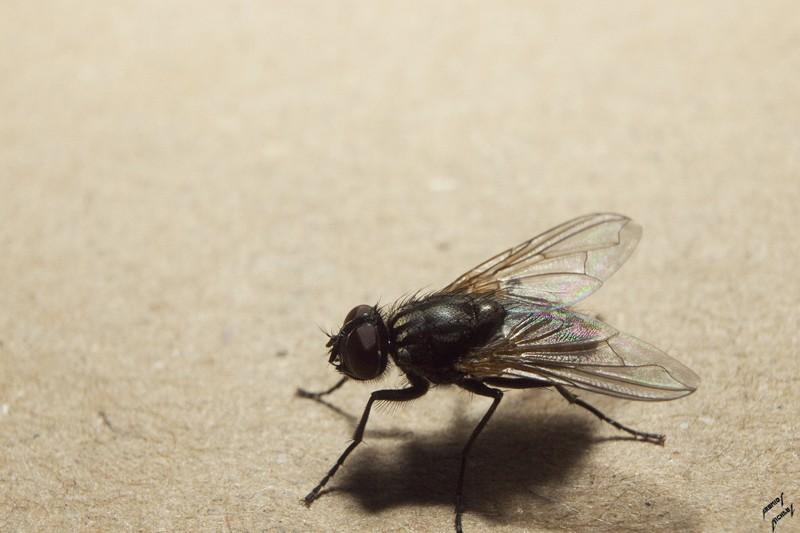 Des mouches en vrac Img_4418