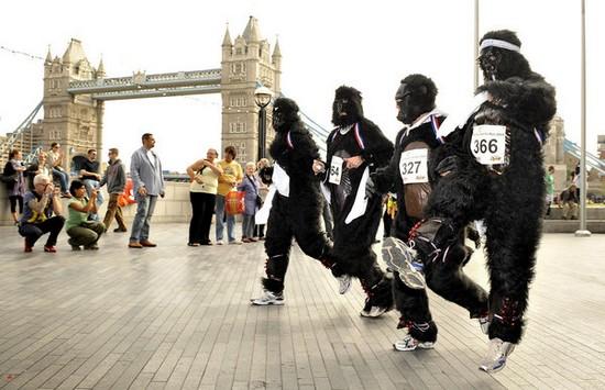 zoologie animaux menacés gorille gorilla marathon course Londres angleterre 700 spécimens