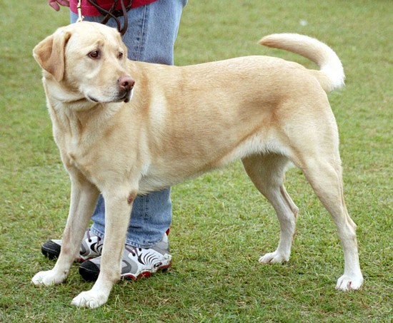 zoologie éleveur tue 4 chiens en moselle thionville labradors condamnation amende Spa