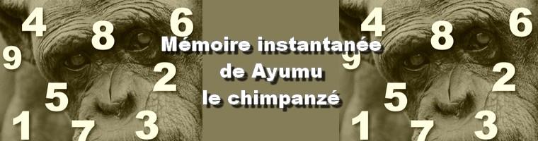 zoologie ayumu chimpanzé mémoire instantanée