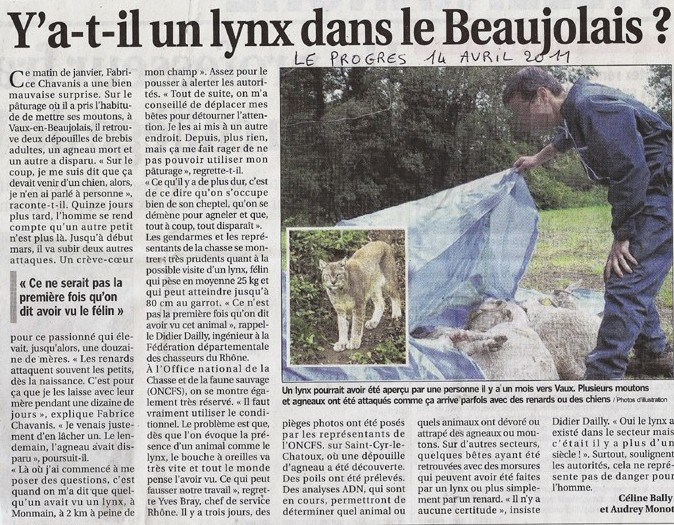 zoologie lynx Bugey progrès de lyon forum tigre ain félin observation Vaux attaques moutons brebis beaujolais lynx boréal Lynx lynx