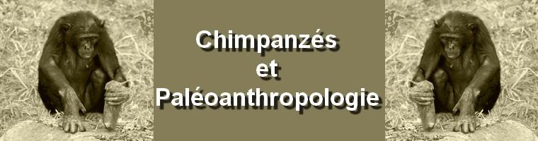 Paléoanthropologie chimpanzé hominé utilisation outil apprentissage mimique