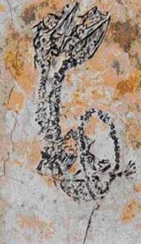 paléontologie hydre animal déformé tératologie forum foetus Hyphalosaurus à deux têtes 2007 anomalie