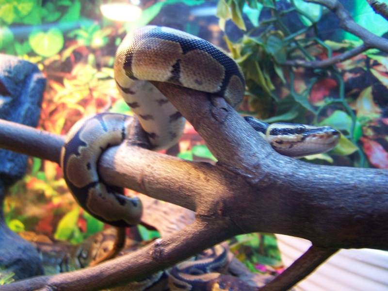 nos reptiles 100_2410