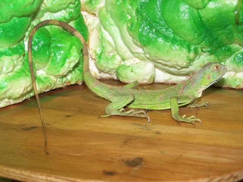 nos reptiles 100_3310