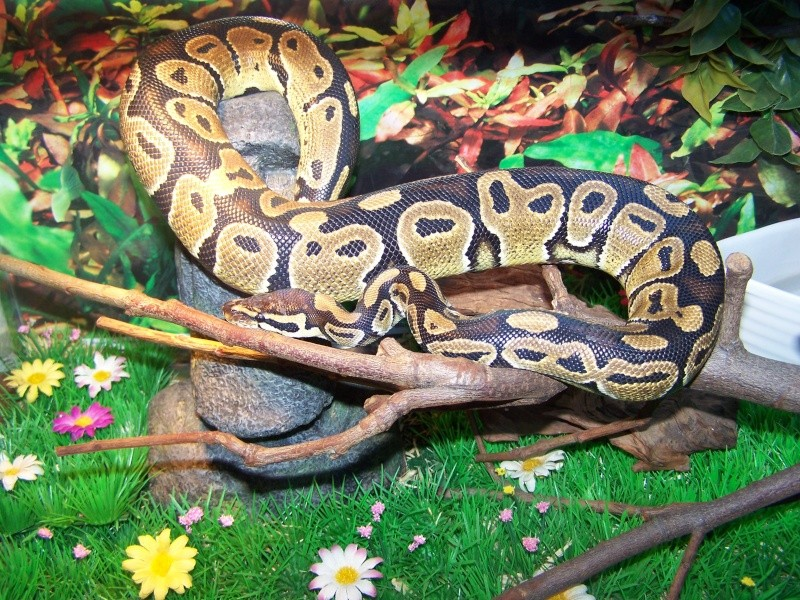 nos reptiles 100_3410