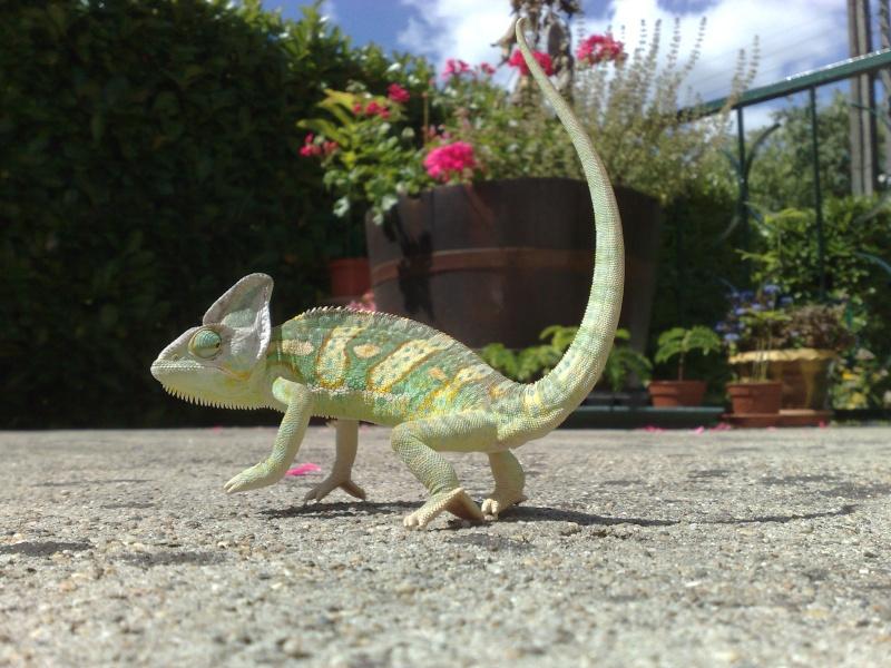 nos reptiles 24082010