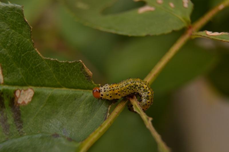 Quelques macros d'insectes - Page 5 Dsc_0012