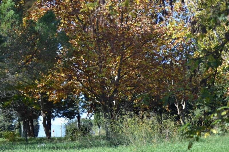 couleurs d'automne - Page 9 Dsc_0017