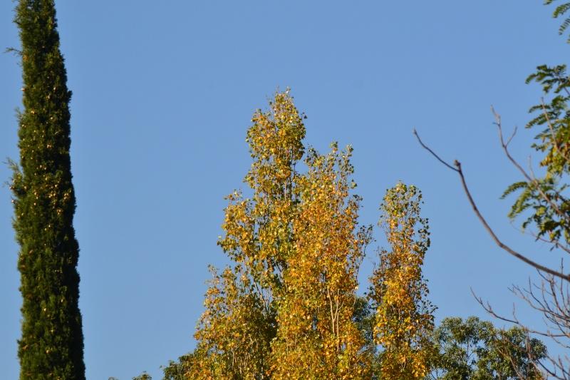 couleurs d'automne - Page 9 Dsc_0019