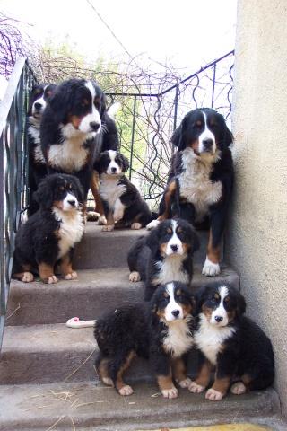 Nos amis les chiens ! Chiens14