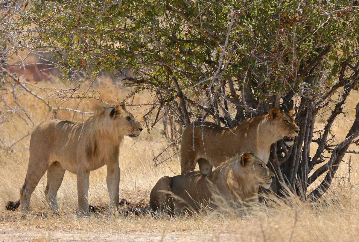 Vols de brousse en Tanzanie .     - Page 3 Img_1510