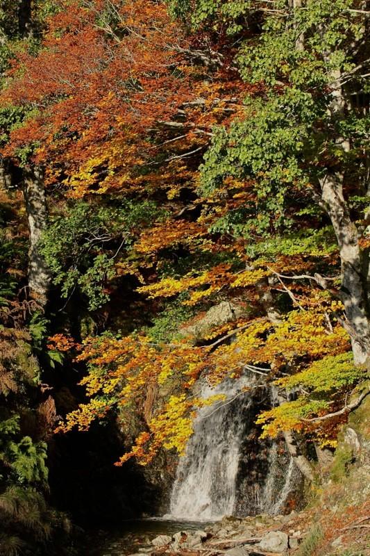 Couleurs d'automne... Img_2414