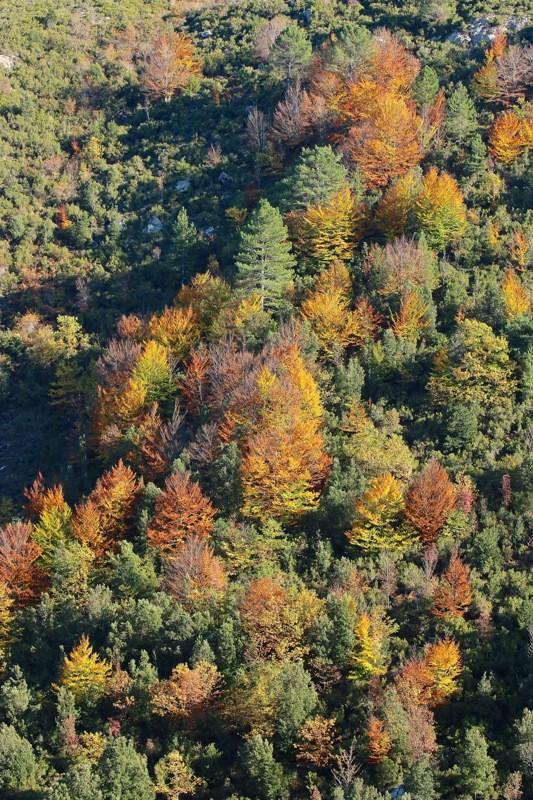 Couleurs d'automne... Img_2417