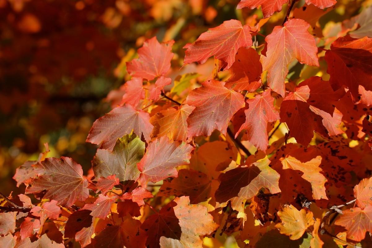 Couleurs d'automne... Img_2418