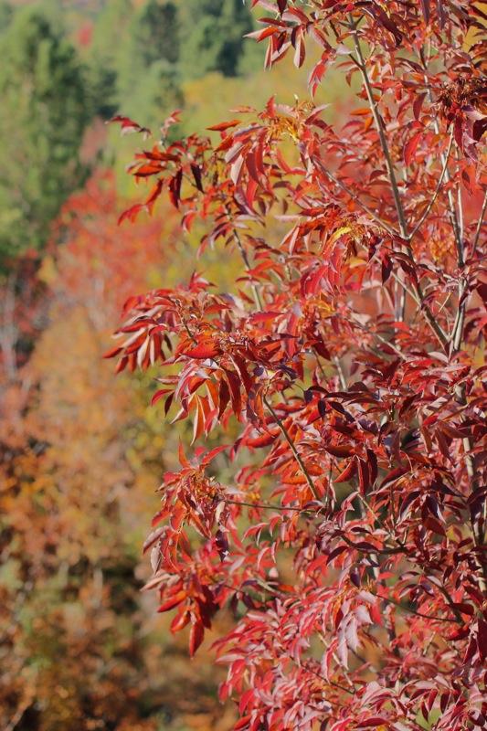 Couleurs d'automne... Img_2419